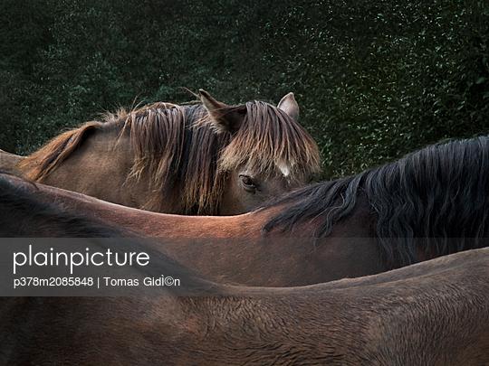 Three Horses B - p378m2085848 by Tomas Gid̩n