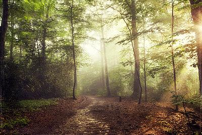 Deciduous forest in spring against the sun - p300m1156603 by Dirk Wüstenhagen