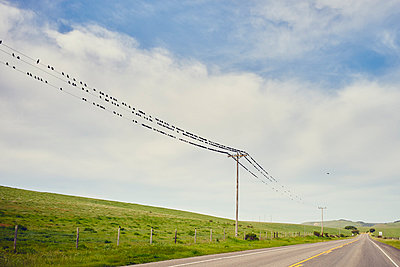 View of highway 1 and large group of birds perched on telegraph wires, Big Sur, California, USA - p924m1030118f by Gu