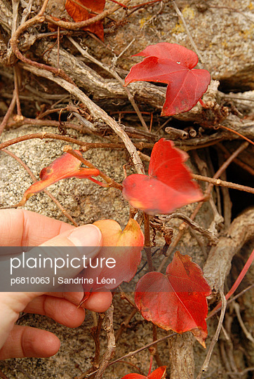 Red leaves - p6810063 by Sandrine Léon