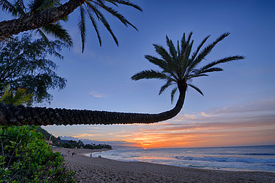 USA, Hawaii, Oahu, palm trees on the beach by sunset - p300m1189220 by Martin Rügner