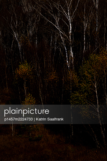 p1457m2224733 by Katrin Saalfrank