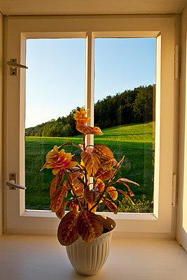 Blumentopf auf Fenstersims - p4320331 von mia takahara