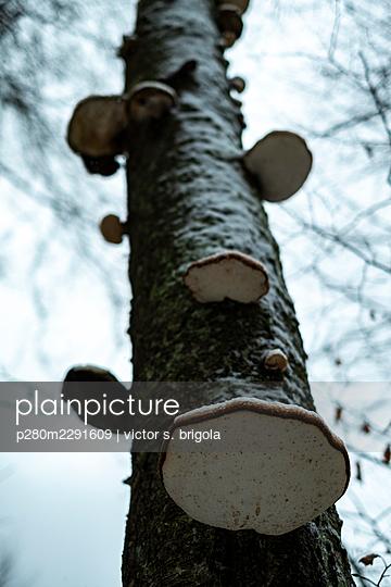 Mushroom Tree - p280m2291609 by victor s. brigola