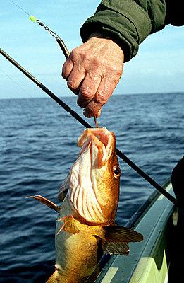 Fisch am Haken - p1190366 von G. Herbst