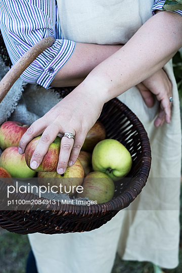High angle close up of person wearing apron holding brown wicker basket with freshly picked apples. - p1100m2084913 by Mint Images
