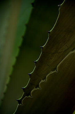 Close Up of a Cactus - p1331m1169211 by Margie Hurwich