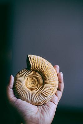 Ammonit - p1417m1584246 von Jessica Lia