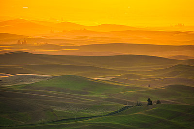 Scenery with rolling hills at sunrise, Steptoe Butte State Park, Palouse, Washington State, USA - p343m1578061 by Christopher Kimmel