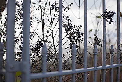 Fence - p586m767118 by Kniel Synnatzschke