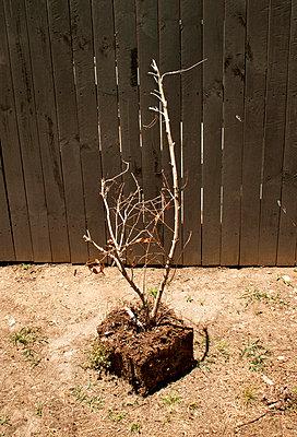 Dead bush - p1125m917383 by jonlove