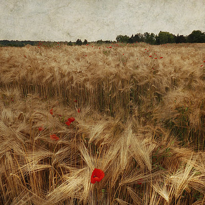 Field Study #35 - p1633m2291001 by Bernd Webler