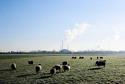 Umweltverschmutzung - p26816843 von Oliver Rüther