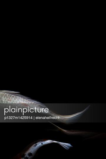 p1327m1425914 by elenahelfrecht
