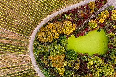 Germany, Baden-Wuerttemberg, Aerial view of Korber Kopf, vineyards in autumn - p300m2059396 von Stefan Schurr