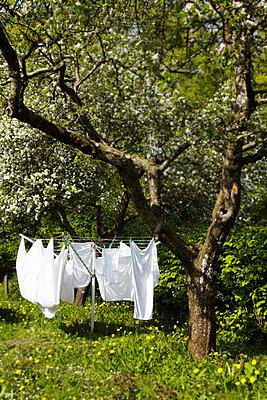 Wäscheständer - p355m984793 von Sabine Büttner