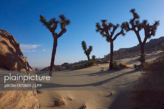 Mojave Wüste - p913m1572655 von LPF