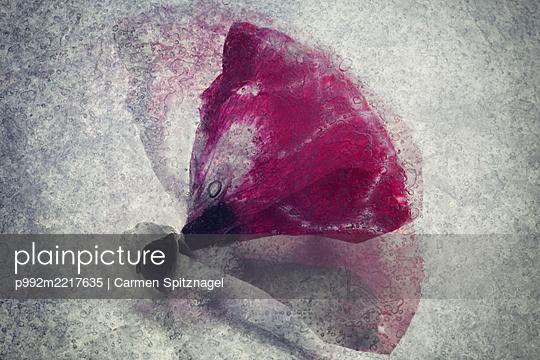 Mohnblume abstrakt - p992m2217635 von Carmen Spitznagel