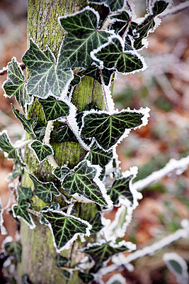 Freeze on leaves - p7780072 by Denis Dalmasso