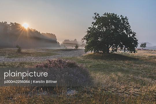 Germany, Hamburg, Boberger Dune wildlife reserve in fog at sunrise - p300m2256064 by Kerstin Bittner