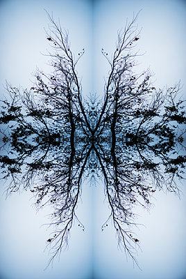 Abstract kaleidoscope of the branches of a tree canopy - p1047m1137574 by Sally Mundy