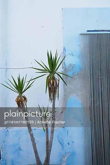Palme vor Hauswand - p1141m1160123 von Annette Fischer
