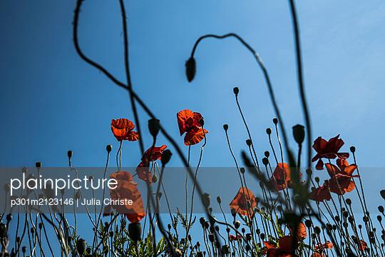 p301m2123146 von Julia Christe