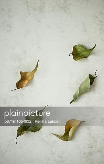 Dead leaves - p971m1054832 by Reilika Landen