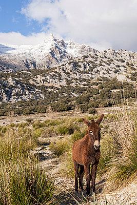 Serra de Tramuntana - p1021m1537876 by John-Patrick Morarescu