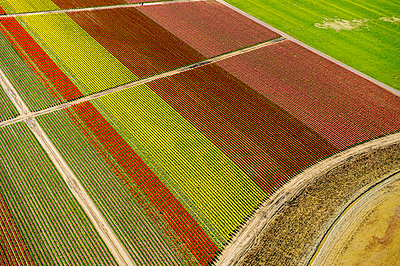 Aerial view of tulip fields and paths - p924m1030218f by Pete Saloutos