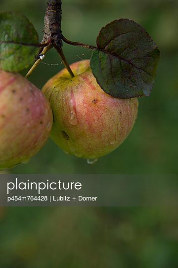 Fresh apples - p454m764428 by Lubitz + Dorner