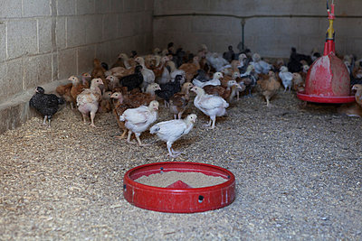 Tierhaltung - p1058m817149 von Fanny Legros