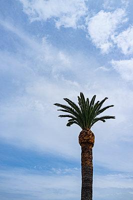 Palm tree - p280m2253493 by victor s. brigola