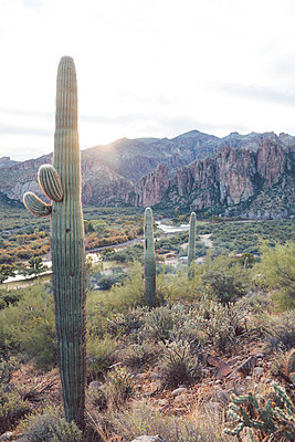 Cacti in front of mountain range, Arizona, USA - p756m2157859 by Bénédicte Lassalle