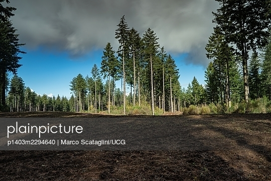 Clearing In a Forest - p1403m2294640 by Marco Scataglini/UCG