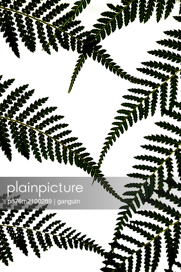 fernleaves - p876m2100289 by ganguin