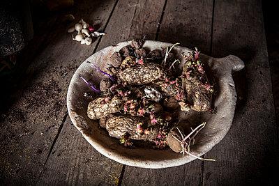 Old potatoes - p1441m2028179 by Benjamin Zibner