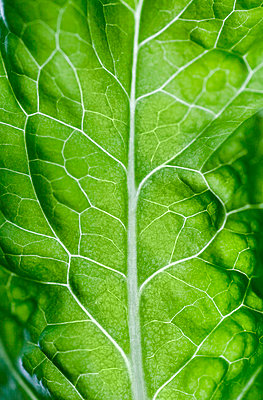 Close-up of a lettuce leaf - p3740745 by Lauri Rotko