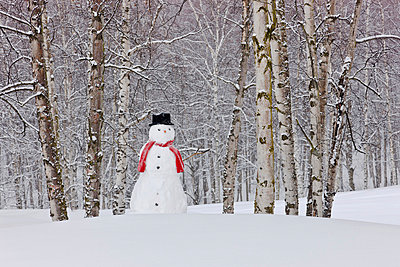 Snowman Wearing A Scarf And Black Top Hat Standing In A Snow Covered Birch Forest, Russian Jack Springs Park, Anchorage, Southcentral Alaska, Winter - p442m838226 by Kevin Smith