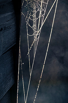 Spiders web - p1057m2237833 by Stephen Shepherd