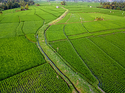 Indonesia, Bali, Aerial view of rice fields - p300m2042502 by Konstantin Trubavin