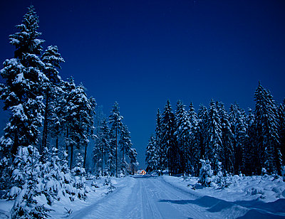 Snowy forest - p575m1074549f by Marten Dalfors