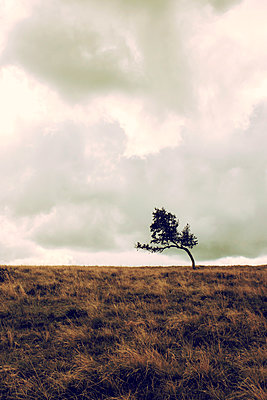 Single tree in landscape - p879m1488112 by nico