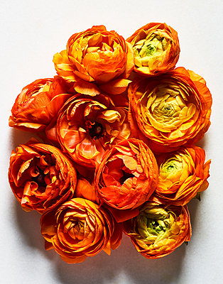 Orange coloured flowers - p1397m2054655 by David Prince