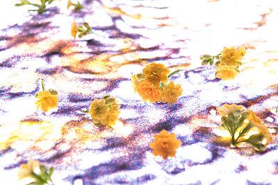 Colours  - p1469m1529045 by Anna Shumanskaia