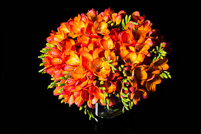 Close up of Orange Freesias Bouquet - p669m824029 by Ben Miller