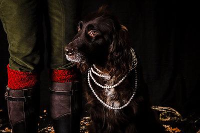 Sniffer Dog - p930m891236 by Ignatio Bravo