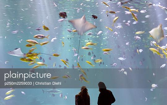 Two people in an aquarium - p250m2259033 by Christian Diehl