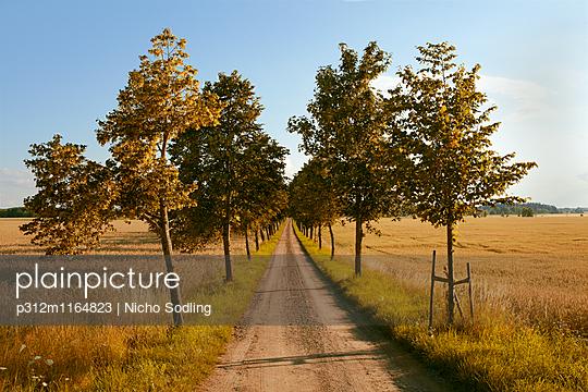 p312m1164823 von Nicho Sodling