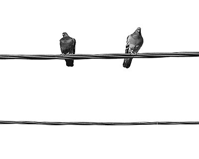 Pigeons on wires - p312m1046401f by Mikael Svensson